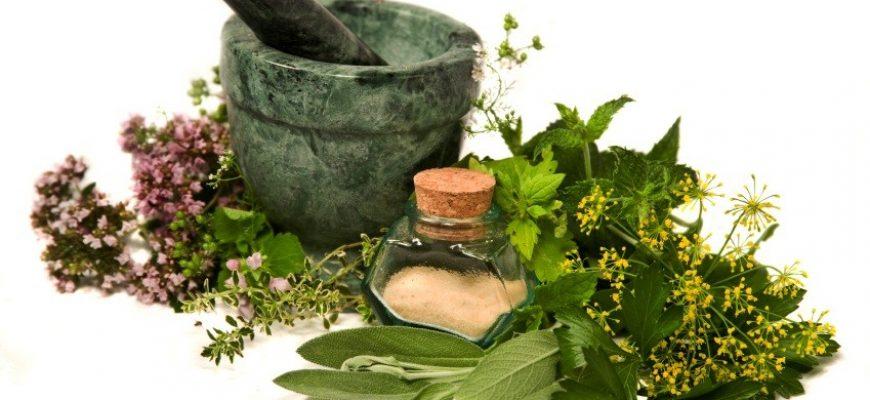51 יתרונות עץ מורינגה: סיבות להוסיף את מורינגה לתזונה היומית ולמשטר היופי שלך